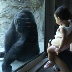The gorilla checking out Elise
